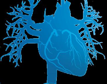 Mechanical Circulatory Support (VAD, ECMO, CPB)