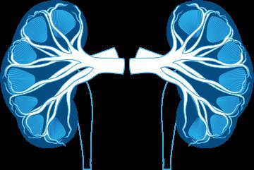 Renal Replacement / Hemodialysis
